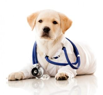 Cachorro doctor