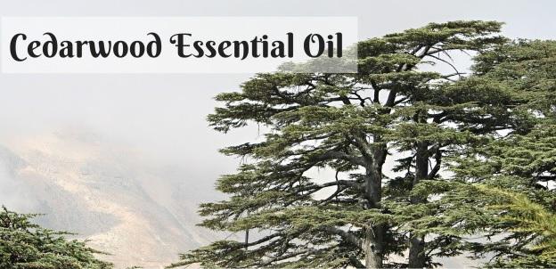 aceite esencial cedro cedarwood