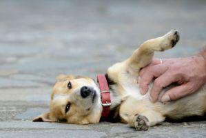 petting perros