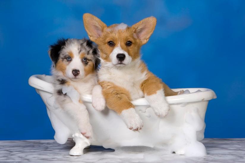 perros en la bañera