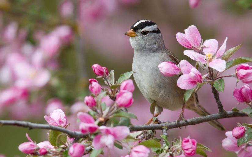 bird-and-flower-wallpaper-11