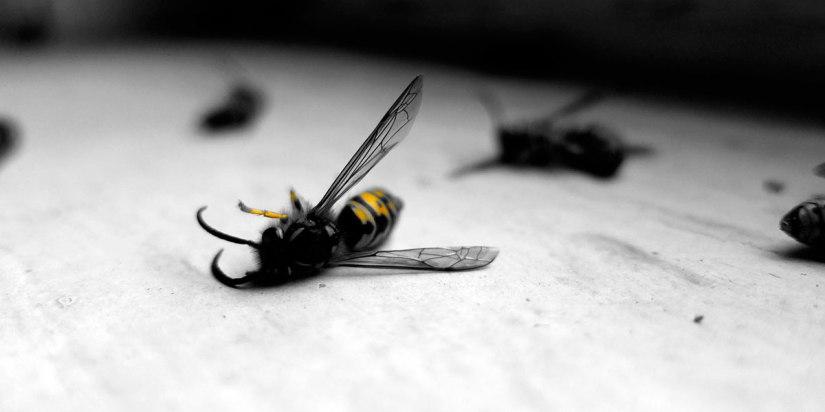 insecto-patas-arriba