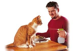 o-pet-tips-cat-water