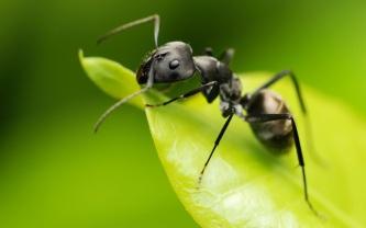 somos-como-hormigas