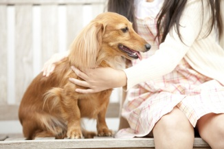 caricias-perro