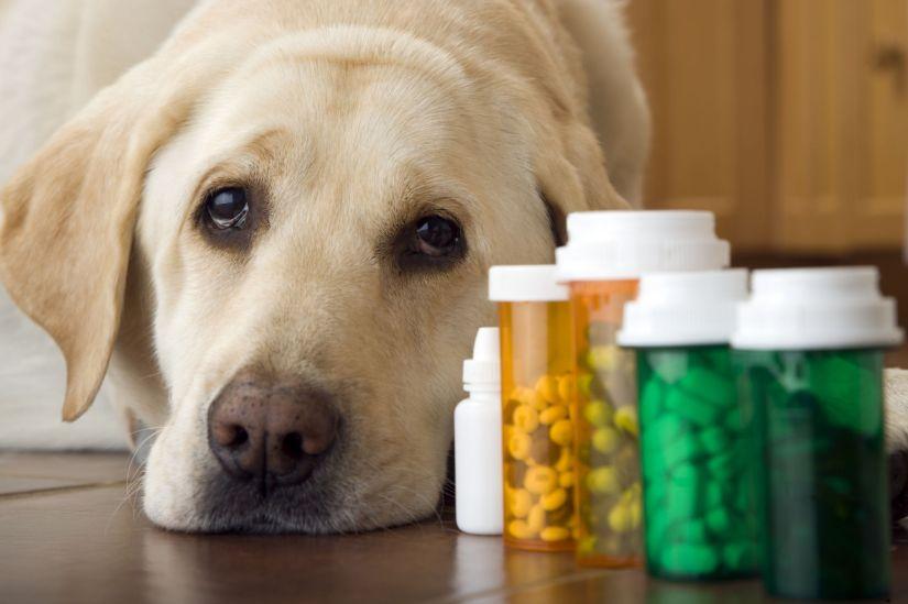 perro farmacos medicamento