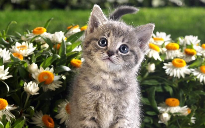 kitten_flowers