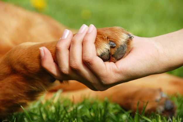 mascotas perro golden