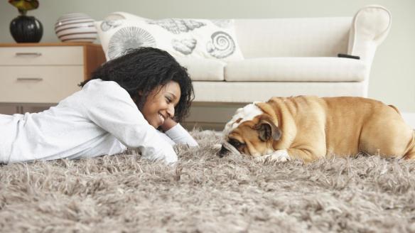 dog carpet perro tapete alfombra mascota