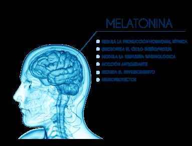 melatonina-ventajas