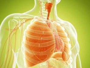 pulmones-500x380