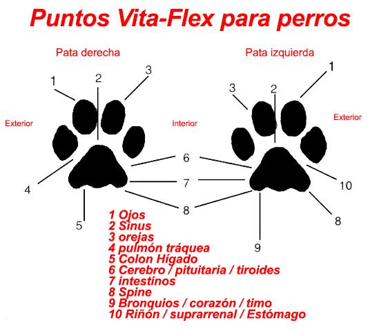 puntos-vita-flex-para-perros