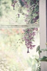 ventana-flores