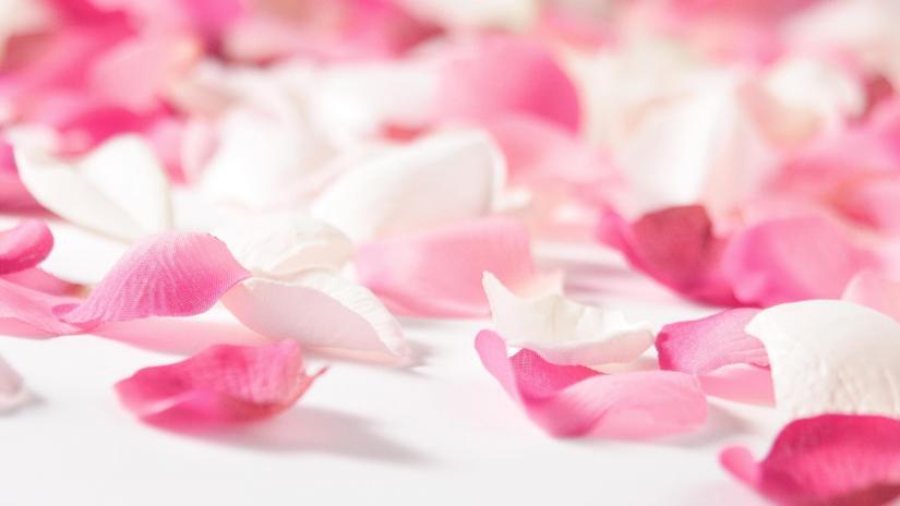 flower-pink-petals