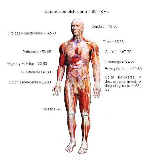 frecuencia-electromagnetica-del-cuerpo-sano