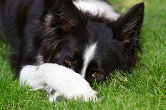 perro mascota molesto triste