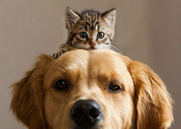 Dog and cat perro y gato mascotas