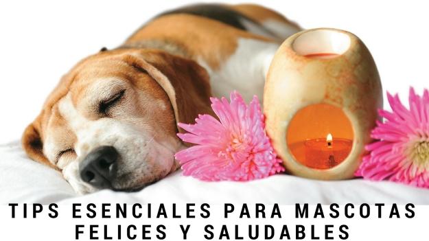 tips-esenciales-para-mascotas-felices-y-saludables