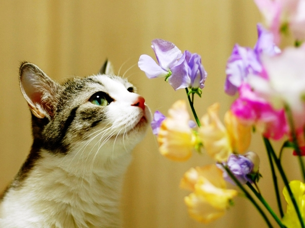 cat-smells-flowers
