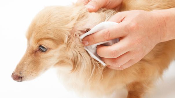 dog-wipes