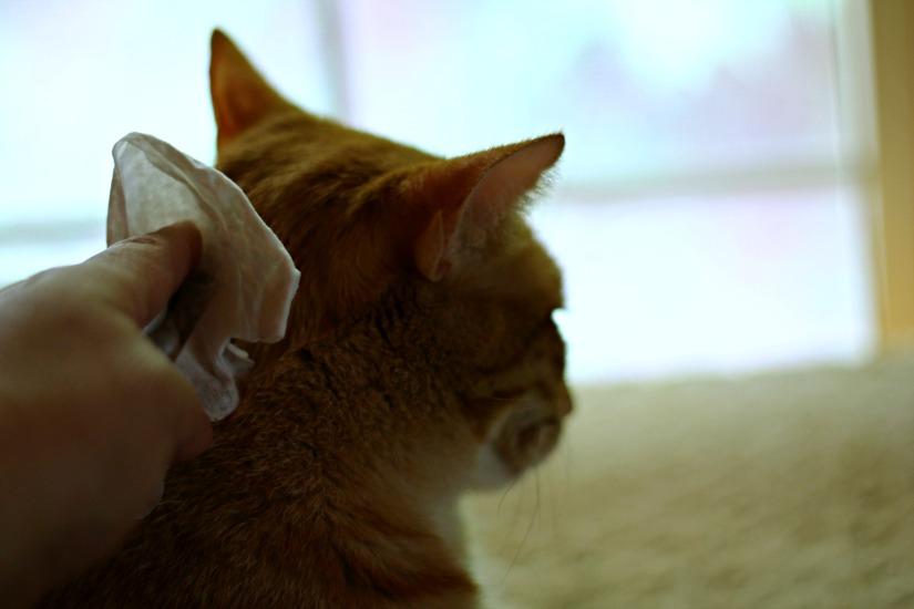 toallitas para gatos