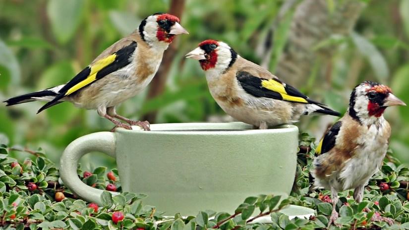 taza pajaros aves