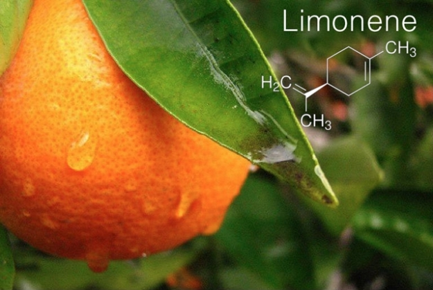 terpene-profile-limonene-the-leaf-online2