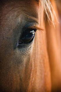 caballo-mirada