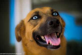 photo: Annie WhisperPawtography